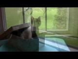 Смешной котенок в коробке