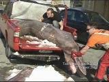Акула домовой очень редкий хищник но самый страшный и опасный в мире такая рыба хватает человека и тащит на дно а потом съедает